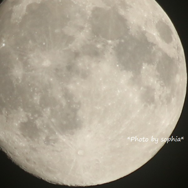 十五夜お月さん