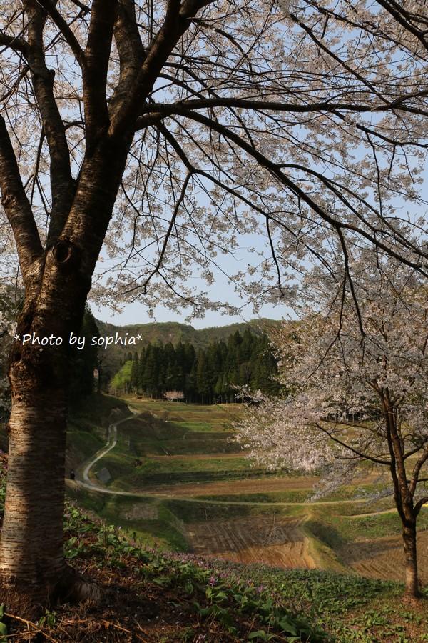 春の棚田の光景