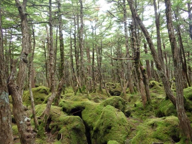 IMGP4488 もののけの森(640x480)