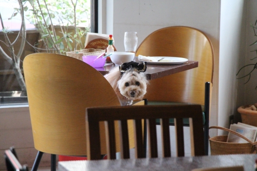 ご近所カフェ