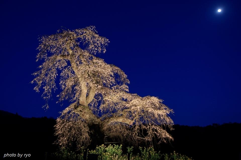 長沢のしだれ桜 2016 月と星_2