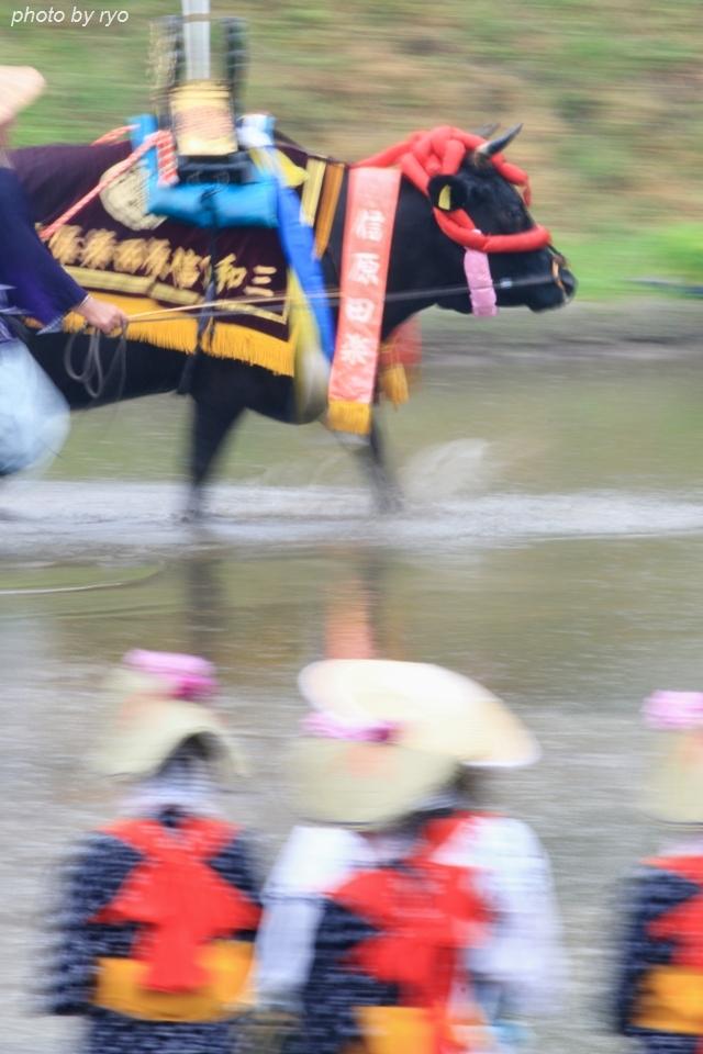 信原田楽大花田植 2016_2