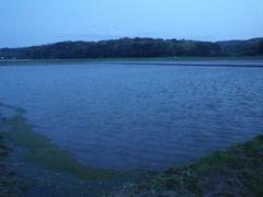 【写真】夕暮れ時の水が張られた農園前の田んぼの様子