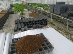 【写真】育苗用ポットの土入れ作業の様子