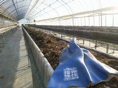 【写真】天地返作業後の高設ベッドの培土と作業用手袋