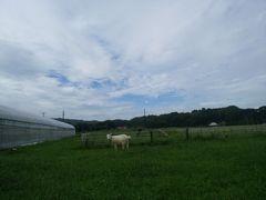 【写真】束の間の晴れ間に草を食べているアランが名前を呼ばれて振り向いたところ