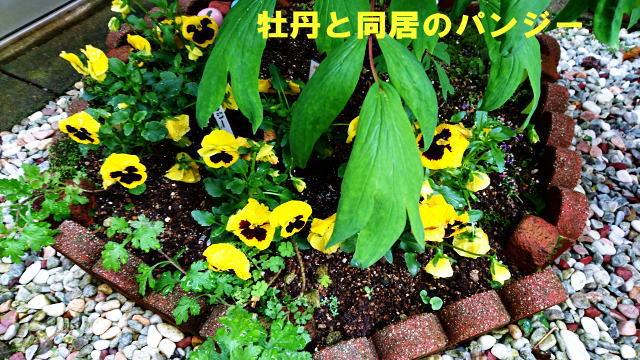 image_20160425104806f21.jpg