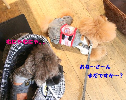 IMG_0603222.jpg