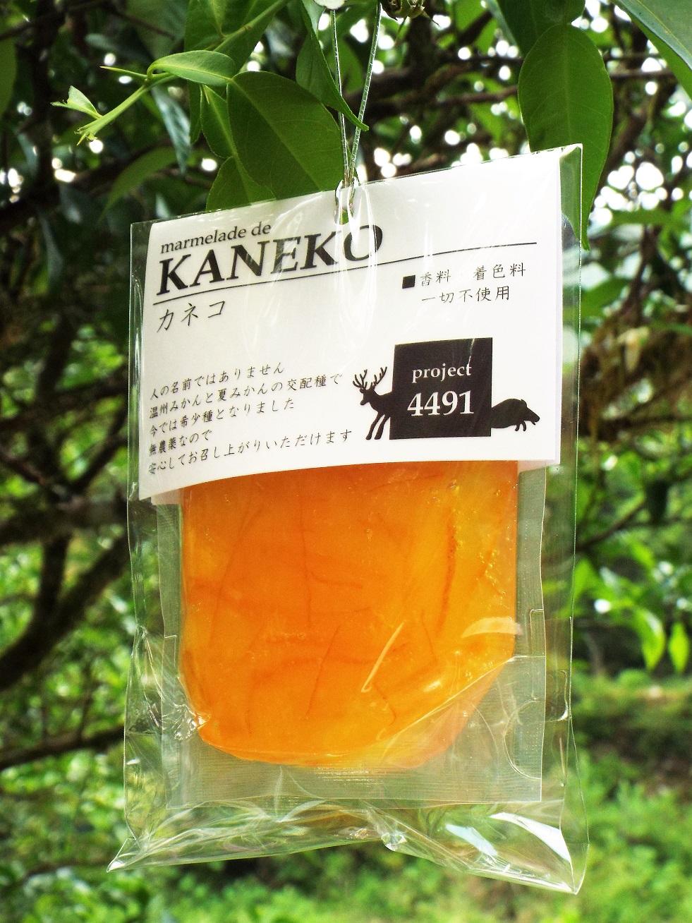 kaneko2016.jpg