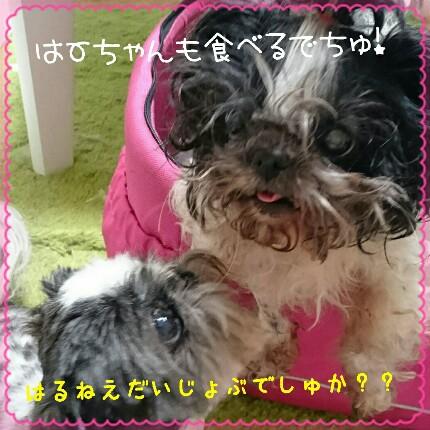 haruka2.jpg