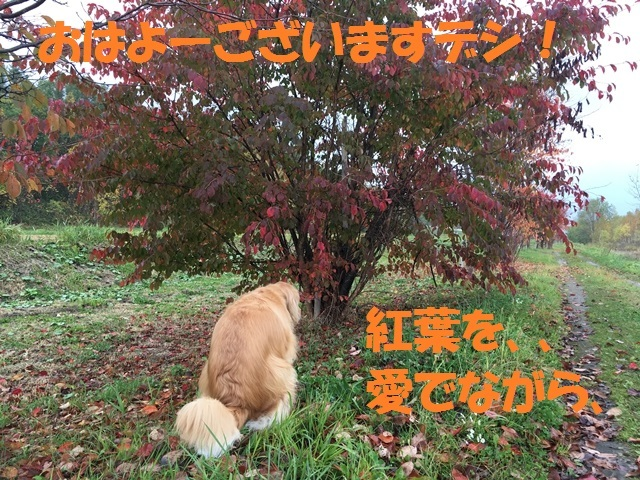 IMG_4293_PP.jpg