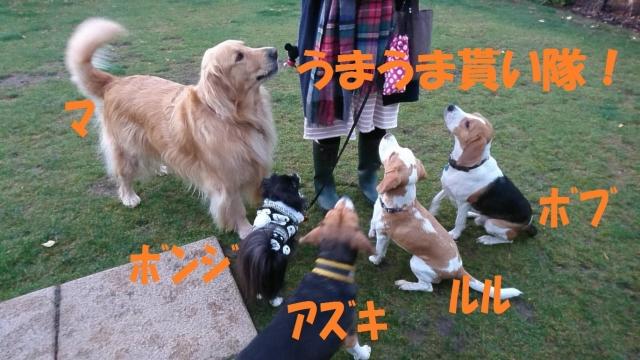 IMG_4462_20181029191534a92.jpg