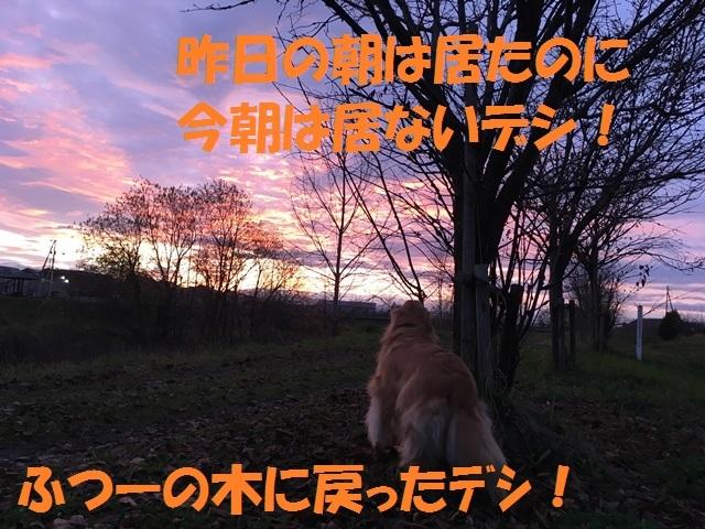 IMG_4654_PP.jpg