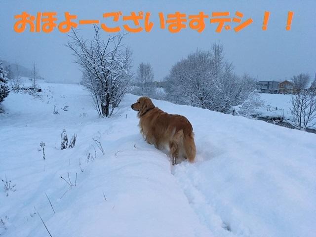 IMG_4816_PP.jpg