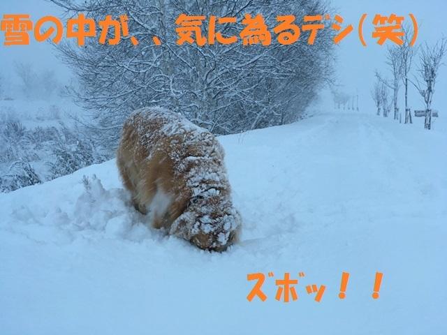 IMG_4822_PP.jpg