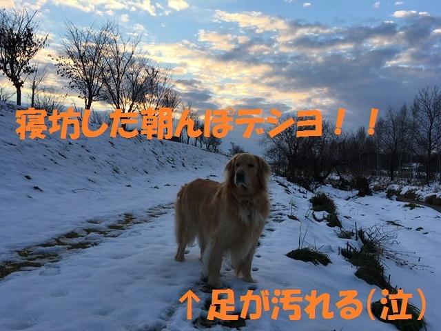 IMG_4875_PP.jpg