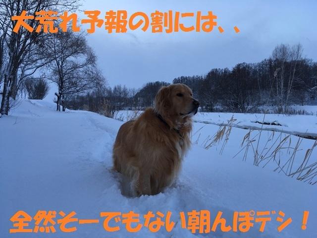IMG_5331_PP.jpg