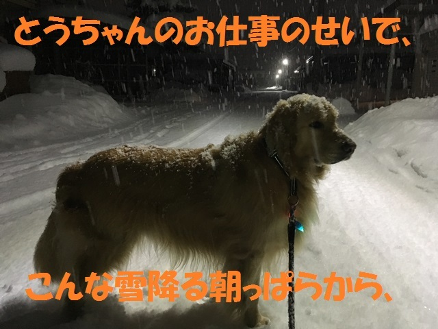 IMG_5351_PP.jpg