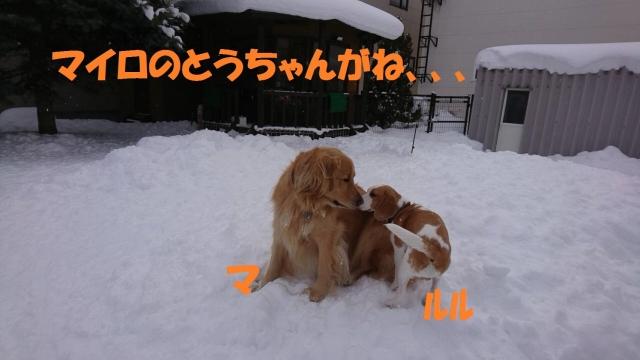 IMG_5562.jpg