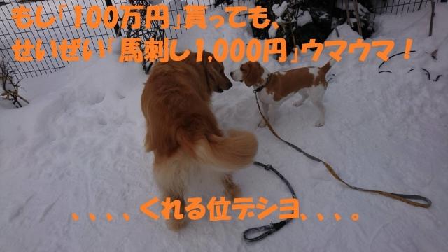 IMG_5567_20190108215553753.jpg