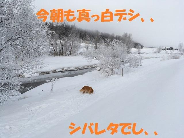 IMG_5683_PPP.jpg