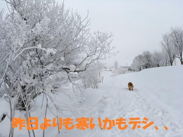 IMG_5684_PPP.jpg