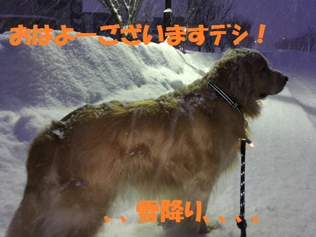 IMG_5754_PPP.jpg