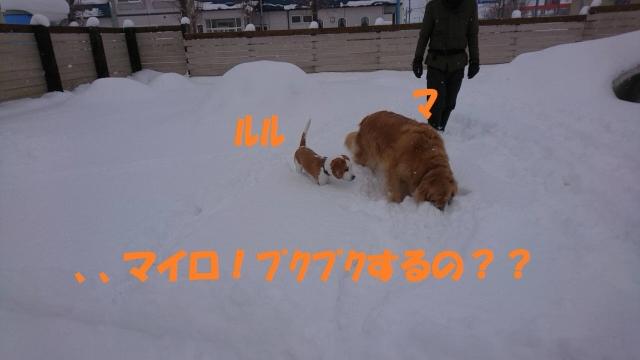 IMG_5760_20190116202949e49.jpg