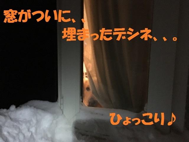 IMG_5765_PPP.jpg