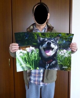 アニコムトレインのポスター10