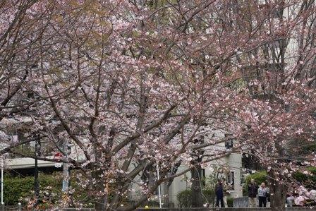 紫金山公園10