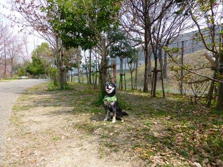 紫金山公園22