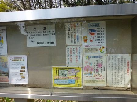 紫金山公園34