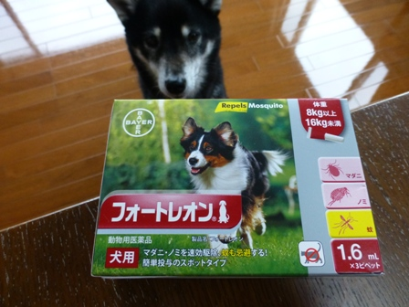 2016狂犬病8