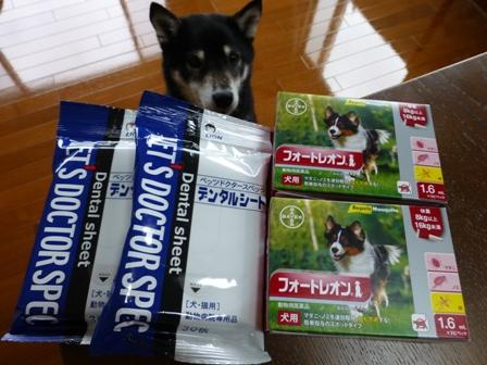 2016狂犬病19