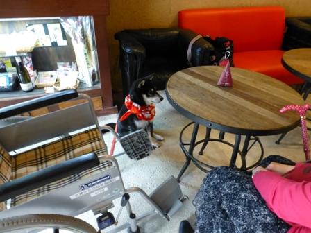 Cafe du Pin7