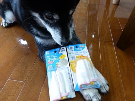 歯磨きグッズ2