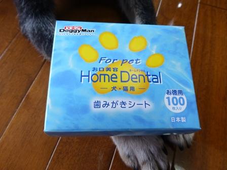歯磨きグッズ18
