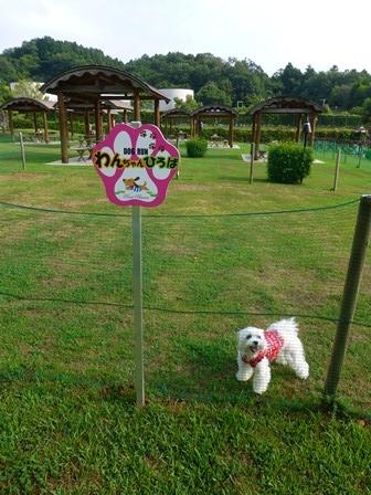 青山ガーデンリゾート10