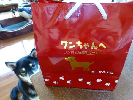 ワンちゃん専用クッキーヨーグルト味 (1)