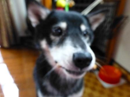 ワンちゃん専用クッキーヨーグルト味 (14)