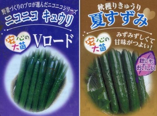 160618cucumbers2