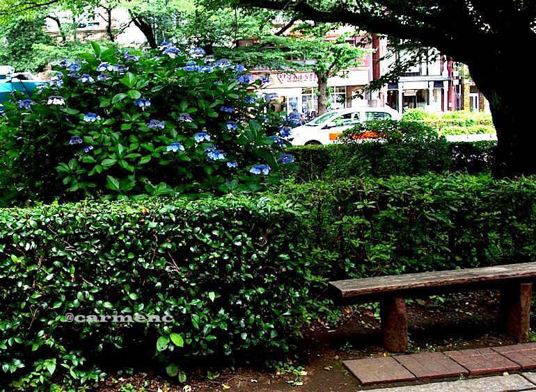 紫陽花とベンチ
