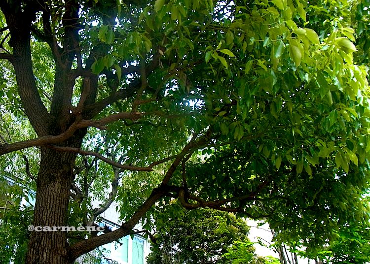 マンションの木々の緑