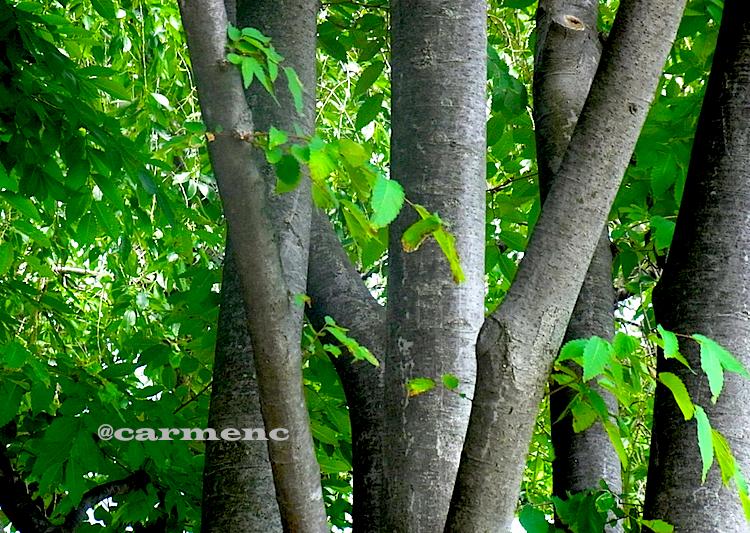 グレーの木