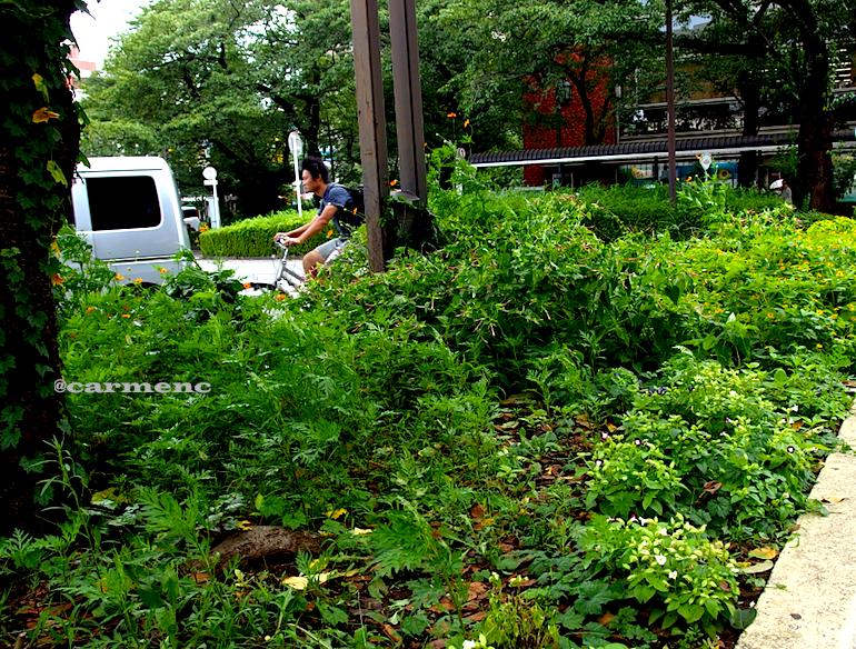 駅前花壇自転車
