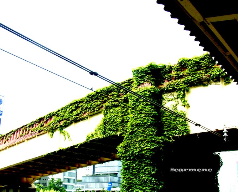 ツタのある橋