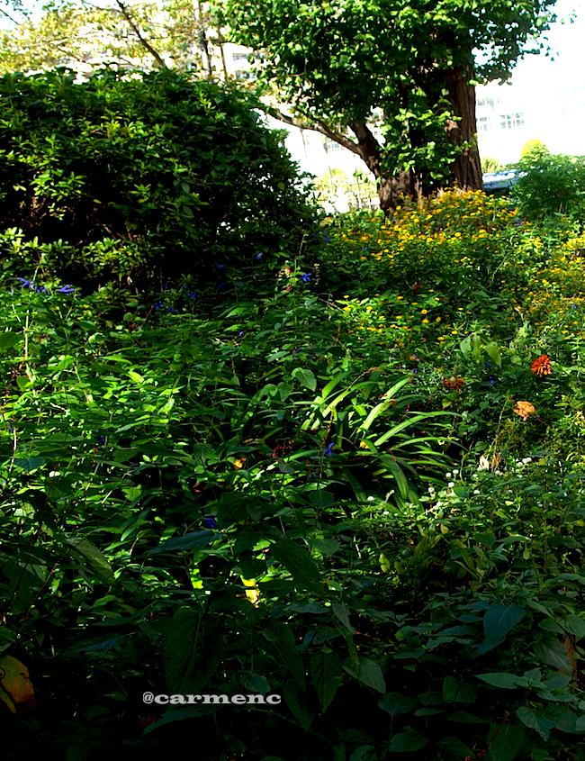 花壇の秋の草