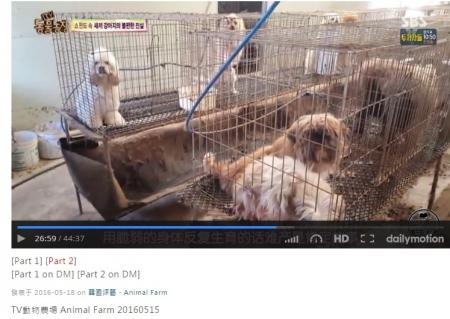 韓国子犬製造工場009