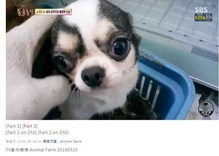 韓国子犬製造工場010